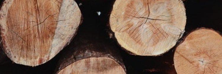 chopped-chopped-wood-cut-2203077